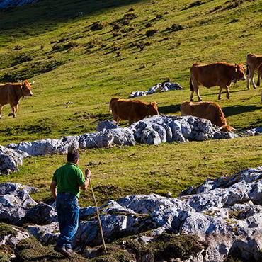 High mountain meadows in the Picos de Europa