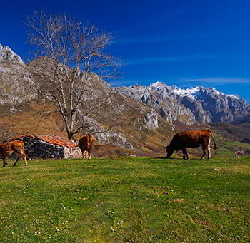 Picos de Europa from Angón in Amieva