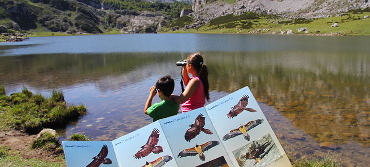 Watching the bearded vulture. Lake Ercina (Cangas de Onís)