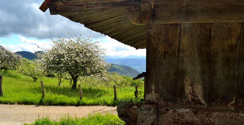 A raised granary next to an apple orchard in Robledo de Anayo (Piloña)